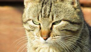 gatti che potrebbero fare tranquillamente le spie