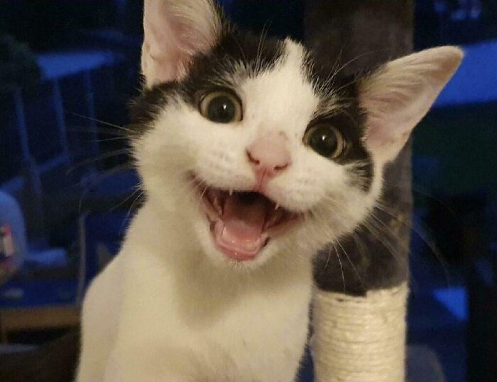 gatto faccia felice sorriso