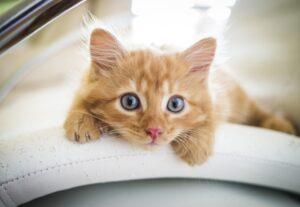 gatti che vogliono andare ovunque