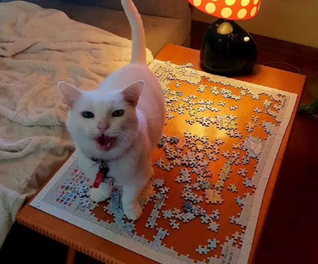 gatto puzzle tavolo in legno