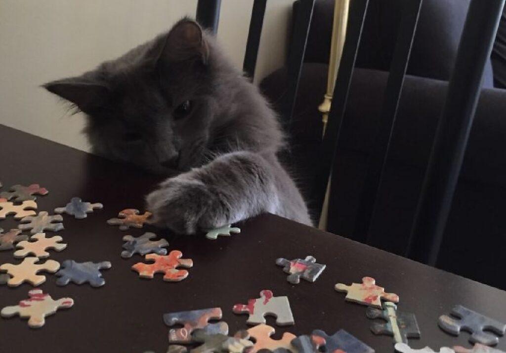 gatto allunga zampetta