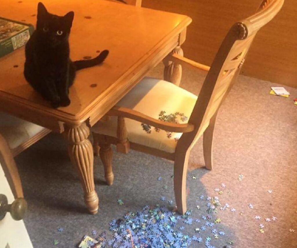 gatto nero butta giù opera