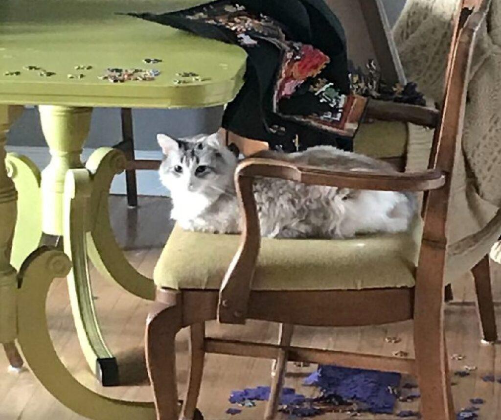 gatto seduto su sedia mentre tutto è a terra