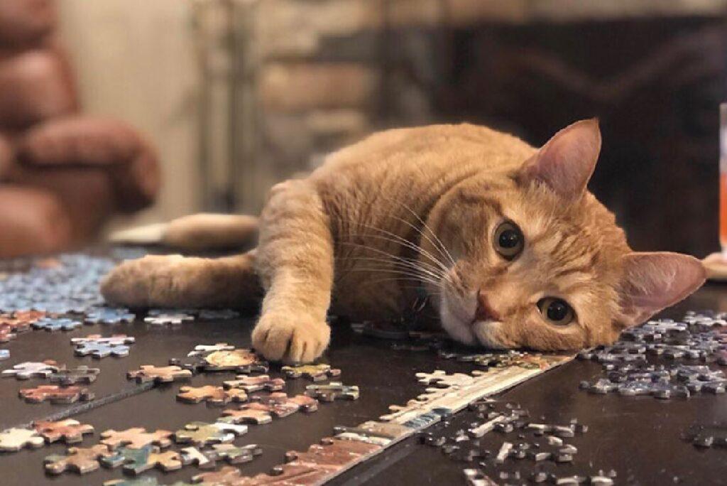 foto artistica gatto sul tavolo