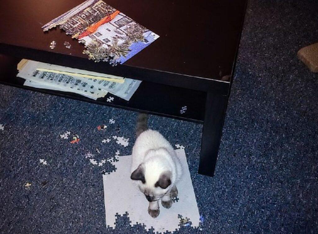 gatto su puzzle quasi completo