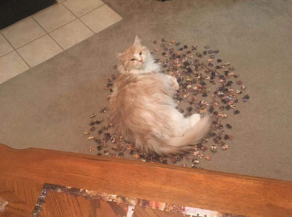 gatto rosso pelo lungo