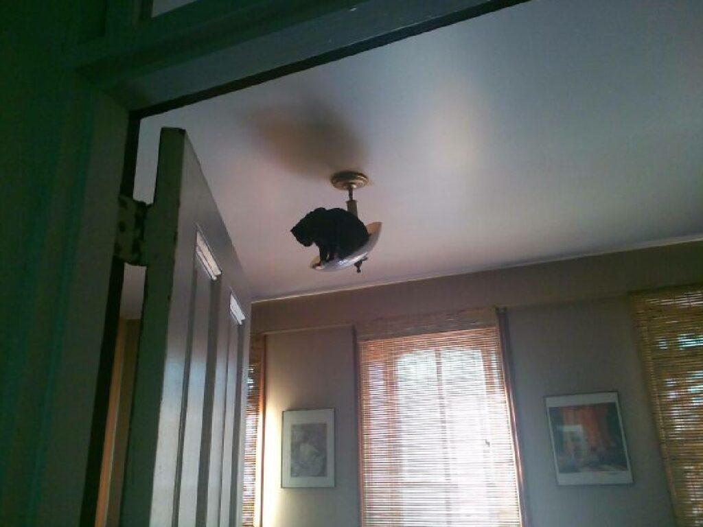 gatto su un lampadario
