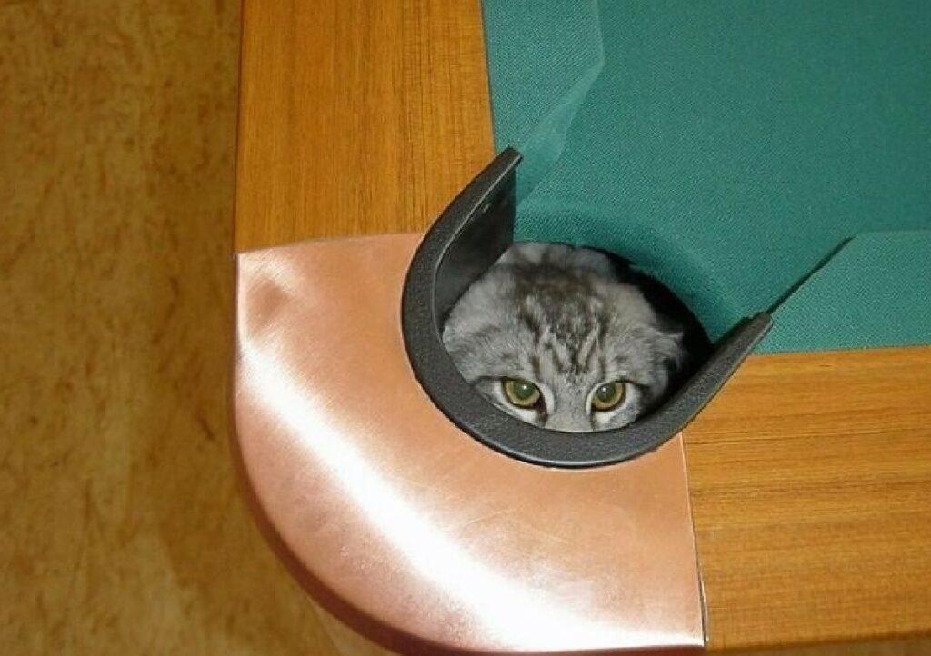 gatto sotto buca biliardo