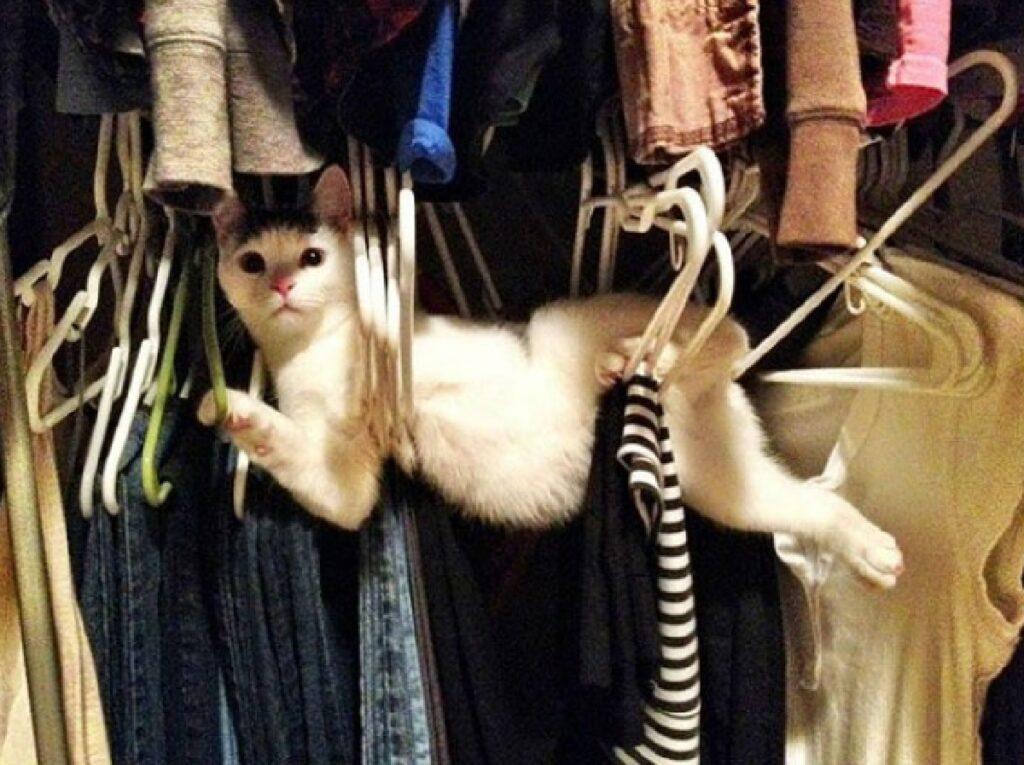 gatto attratto dai vestiti