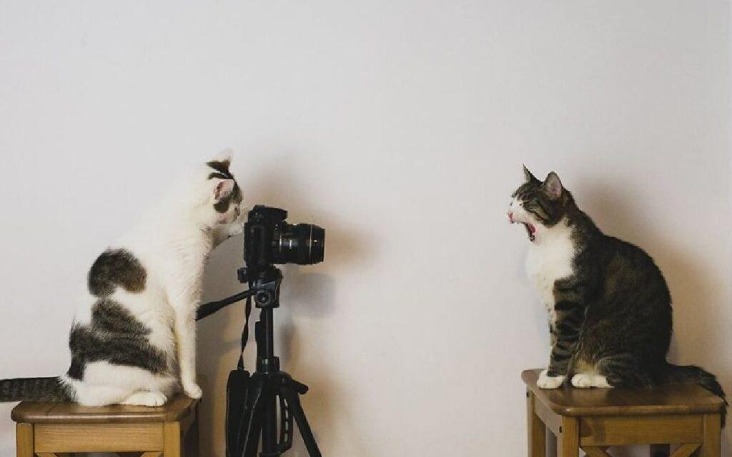gatti davanti obbiettivo