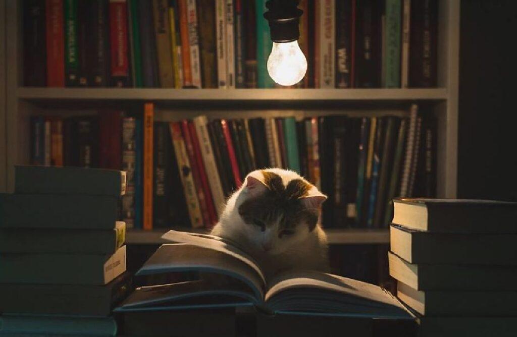 gatto legge un libro