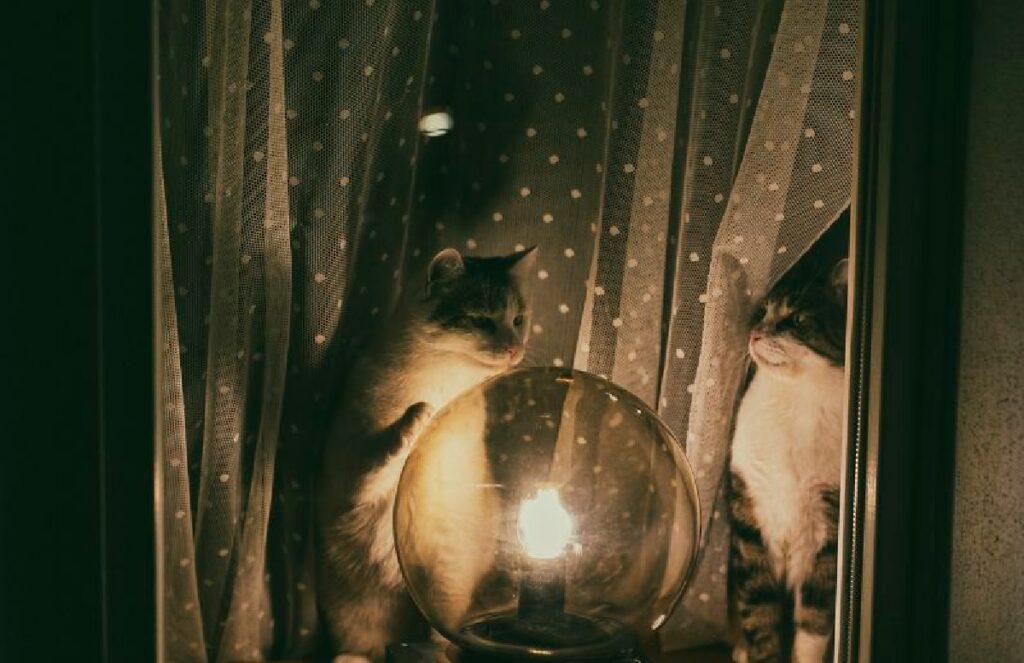 gatti davanti sfera di cristallo