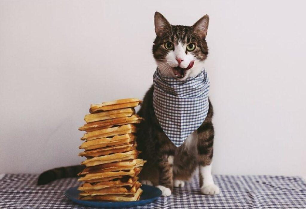 gatti davanti toast pronti