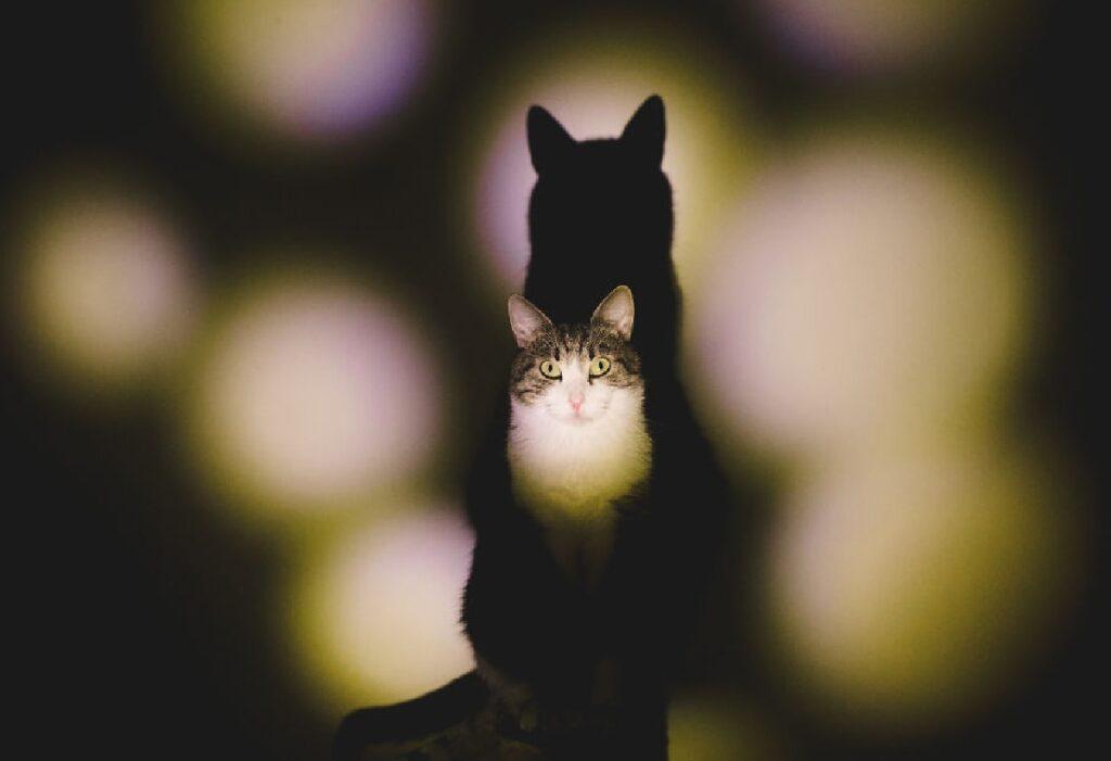 gatto gioco di ombre