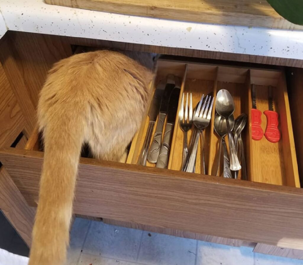 gatto oliver nella libreria