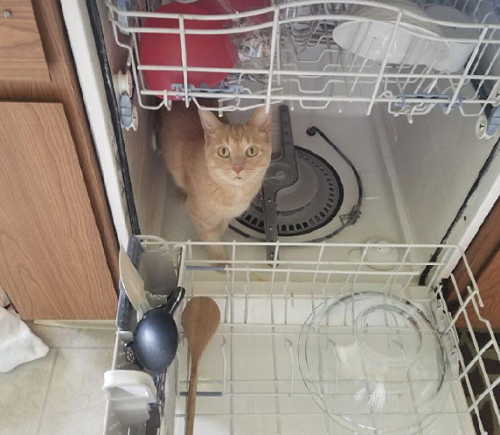 gatto oliver dentro lavastoviglie