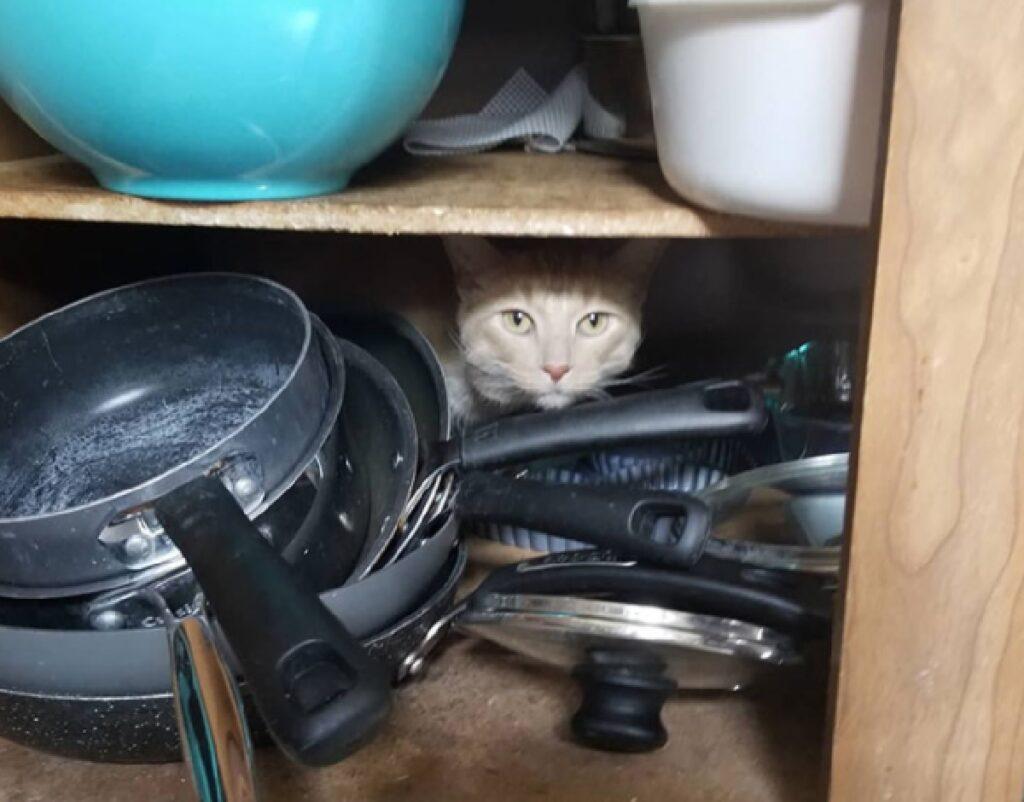 gatto tra le pentole