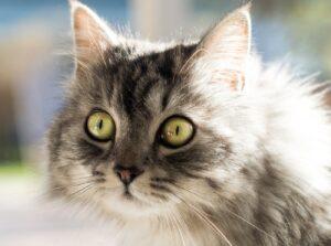 foto nelle quali gatti hanno atteggiamenti strani