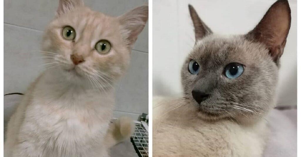 gattini inseparabili cerca una casa