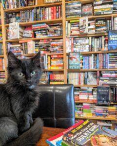 gattino in biblioteca