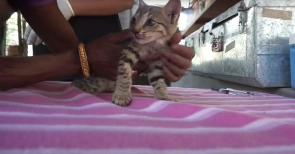 gattino salvato dai volontari in India