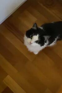 video del goloso gattino