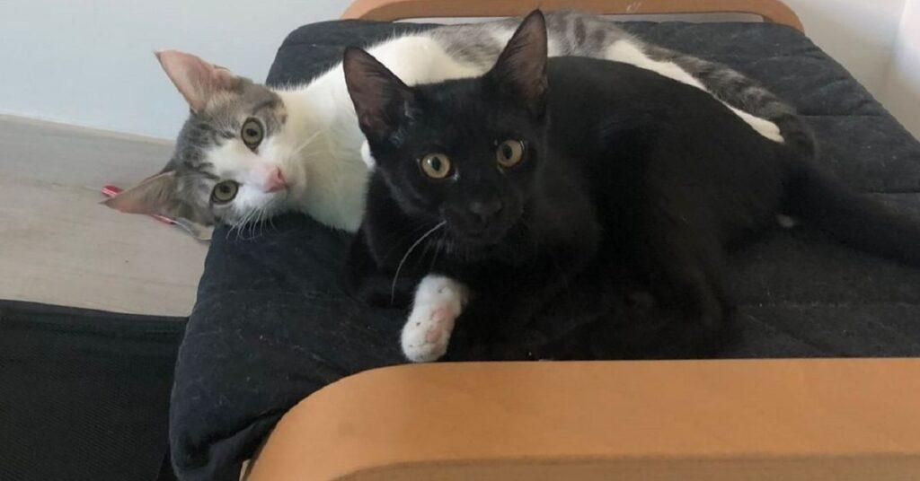 fratellini nel gattile di modena