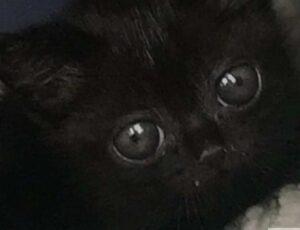 gatto alieno