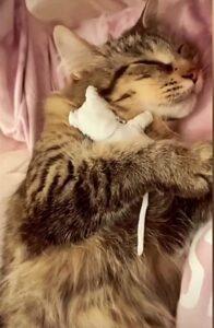 gatta con peluche