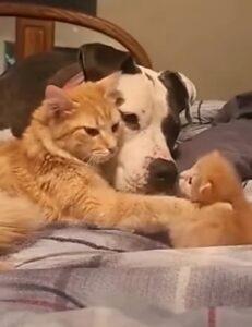 cane con gatti