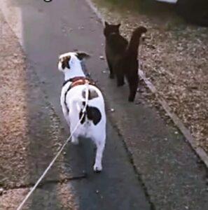 micio e cagnolino