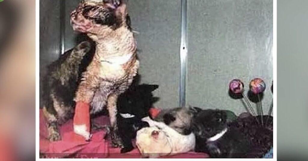 gatta ustionata che ha salvato i suoi gattini