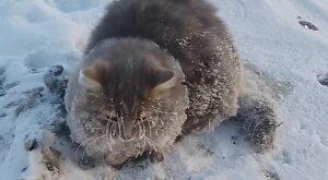 Semyon gatto attaccato suolo
