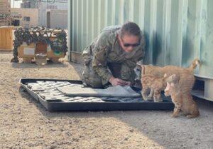 esercito aiuta gatti