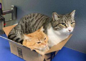 gattini in scatola