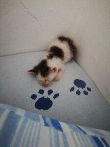 tofu gattino piccolo