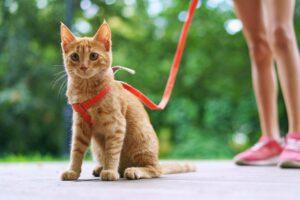 passeggiata col gatto