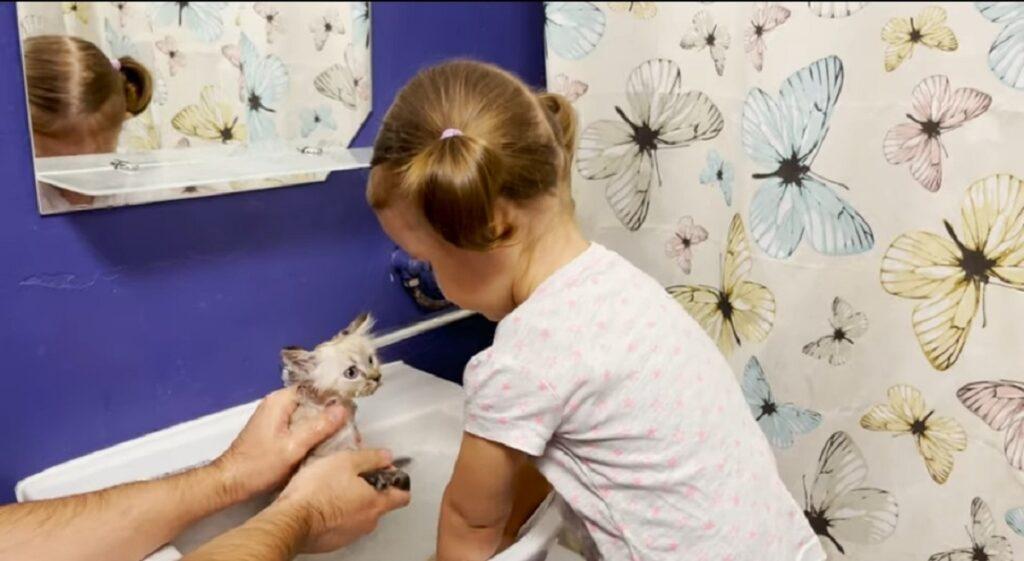 adorabile gattino fa il bagnetto per la prima volta