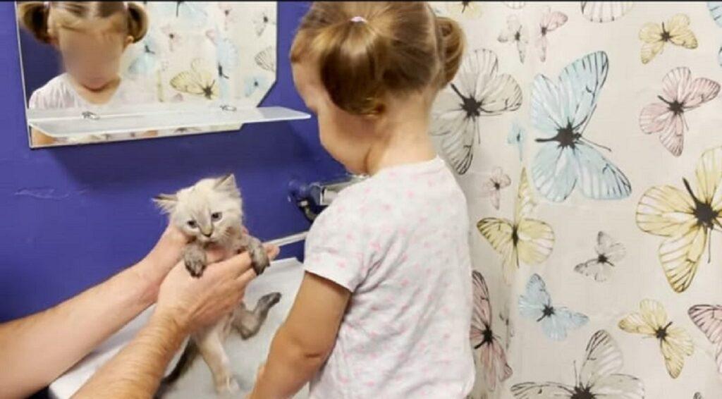 primo bagnetto per l'adorabile gattino