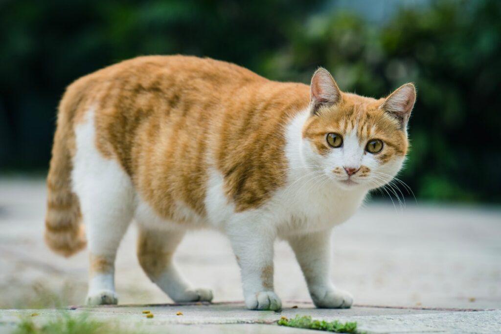 gatto con chili di troppo