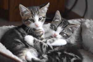 gattini che si abbracciano