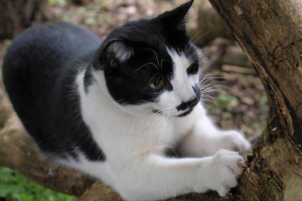 gatto si fa le unghie su un albero