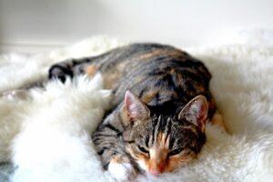 coperte per gatti