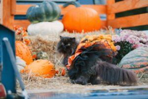 gatto col costume di halloween