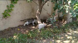 video di dolci gattini