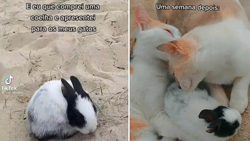 gatti annusano coniglietto