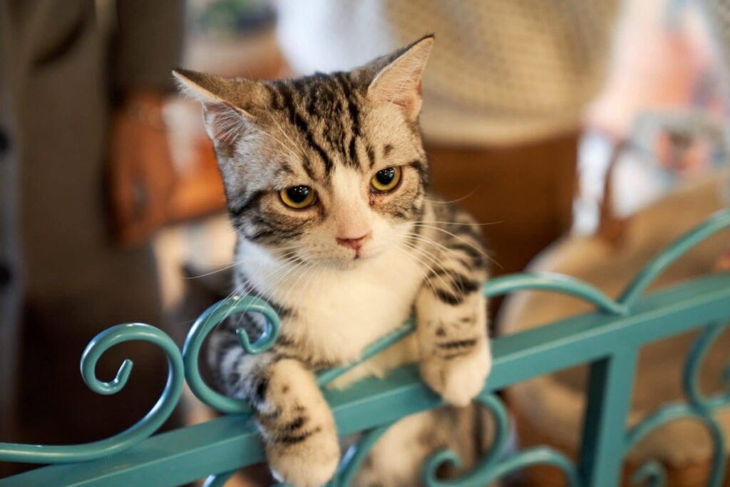 gattino che si arrampica