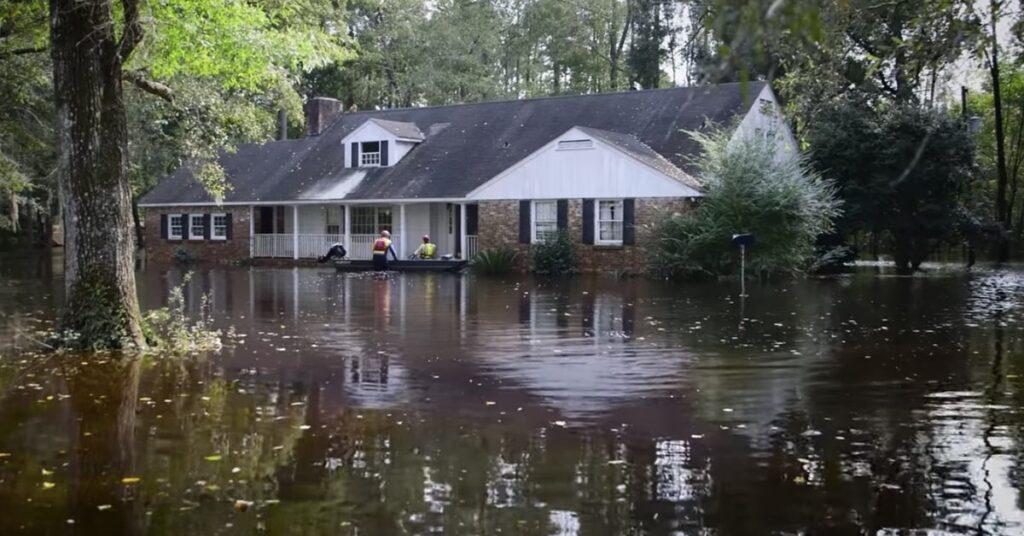 salvataggio gatti durante un'inondazione