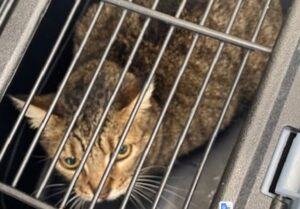 gattino in gabbia