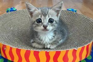 gatto seduto che guarda